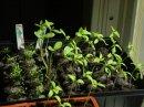 Seedling3