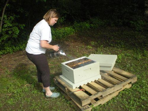 Beehive May 2009 002